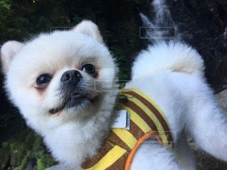 犬の写真・画像素材[550707]