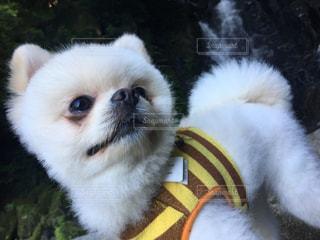 犬の写真・画像素材[550708]