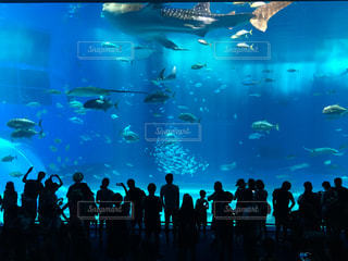 水族館の写真・画像素材[606344]
