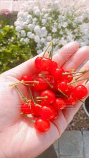 赤い果実を持っている手の写真・画像素材[1167674]