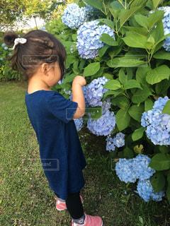 庭に立っている小さな男の子の写真・画像素材[1239528]