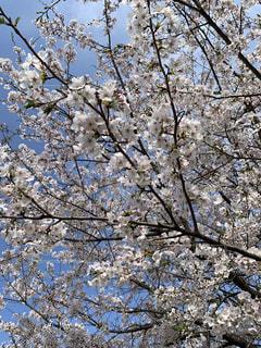 春の写真・画像素材[2001664]