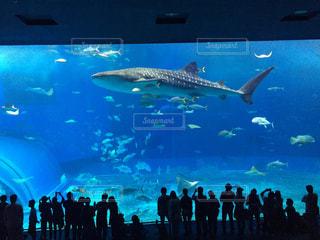 青い水の中の人々 のグループ - No.798639