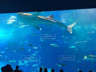 水面下を泳ぐ魚たちの写真・画像素材[798641]