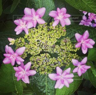 近くに紫の花のアップ - No.808562
