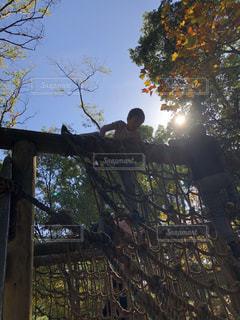 フェンスの前の木の写真・画像素材[2769717]