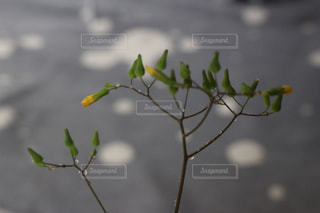 雑草の写真・画像素材[1134932]