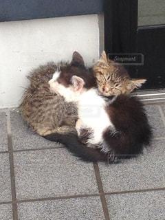 猫の写真・画像素材[552410]