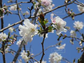 春の訪れの写真・画像素材[552419]