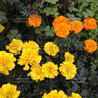 花の写真・画像素材[552257]