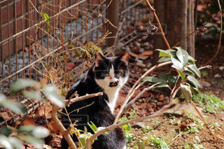 猫 - No.552706