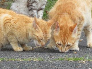 猫 - No.552711