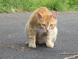 猫 - No.552714