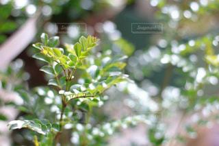 自然 - No.552831
