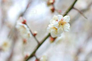自然の写真・画像素材[561696]