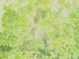 風景 - No.553168
