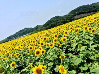 夏の写真・画像素材[553146]