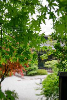 クローズ アップ庭園のの写真・画像素材[1246645]