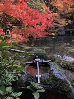 花園のクローズアップの写真・画像素材[2307625]