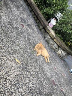 台湾猫村の写真・画像素材[2307628]