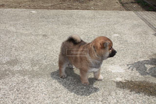 No.569605 犬