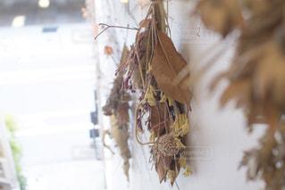花の写真・画像素材[553852]