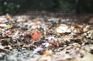 秋の写真・画像素材[555153]