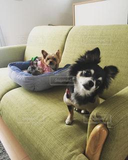愛犬の写真・画像素材[553418]