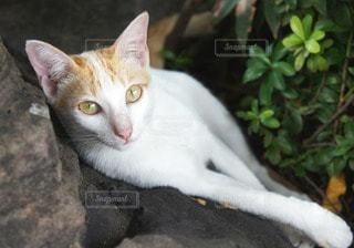 猫の写真・画像素材[11297]