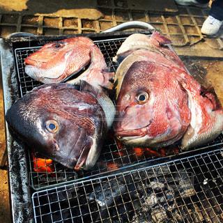 魚の写真・画像素材[554344]