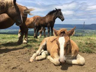牧場に茶色と白の馬の写真・画像素材[1710412]