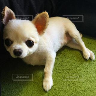 犬の写真・画像素材[617583]
