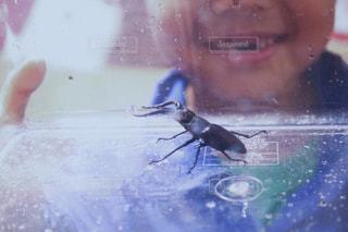初めて自分で捕まえたカブトムシの写真・画像素材[709843]