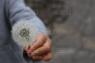 近くの手のアップの写真・画像素材[946319]