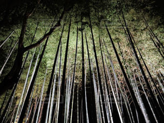 京都の写真・画像素材[555846]