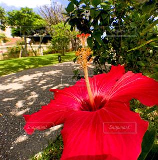 花の写真・画像素材[556015]