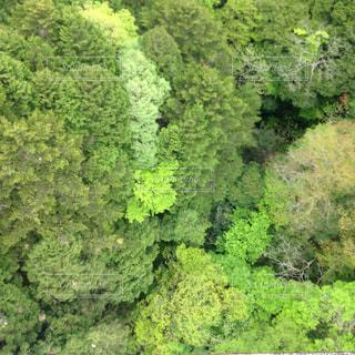 木々の写真・画像素材[555019]