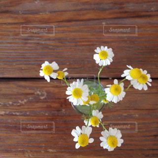 花の写真・画像素材[555021]