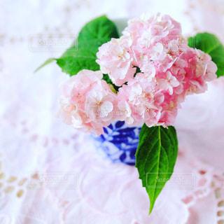 ピンクの写真・画像素材[555163]