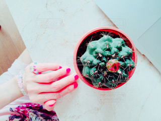花の写真・画像素材[556660]