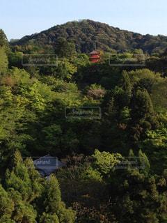 清水寺の写真・画像素材[555532]