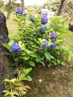 清澄庭園の写真・画像素材[1290893]