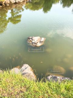清澄庭園の写真・画像素材[1290897]