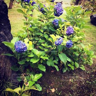 清澄庭園にて撮影の写真・画像素材[1290901]