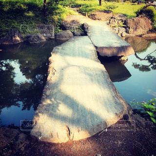 清澄庭園の写真・画像素材[1290905]