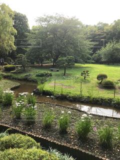 清澄庭園の写真・画像素材[1290919]