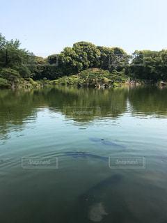清澄庭園の写真・画像素材[1290921]