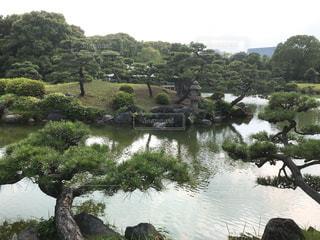 清澄庭園の写真・画像素材[1290923]