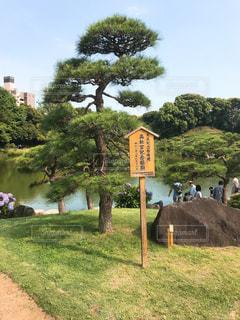 清澄庭園の写真・画像素材[1290927]