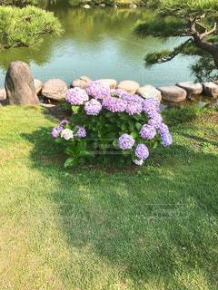 清澄庭園の写真・画像素材[1290929]